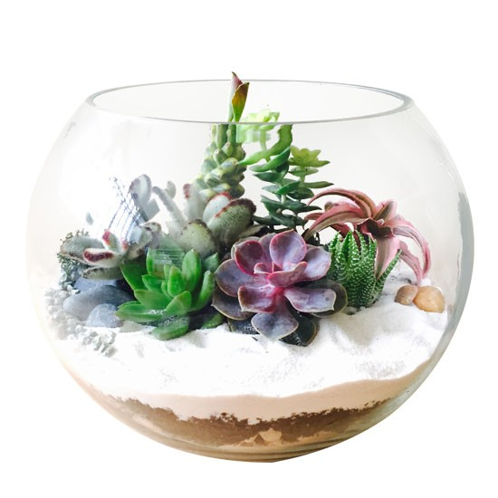 The Fishbowl - Large