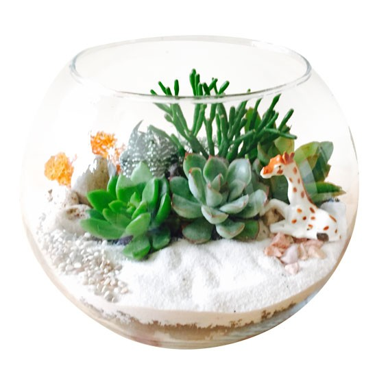 The Fishbowl - Small